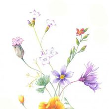 WILD Flowers: Pencil Drawing with Nina Antze
