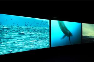 Sublime Seas - John Akomfra...