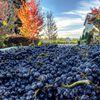 DeLoach Vineyards image