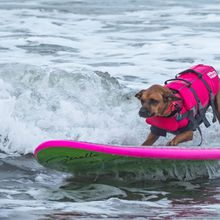 World Dog Surfing Championships 2019