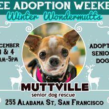 Winter WonderMutts Adoptathon